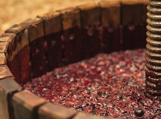 El Viejo Pinot Noir - December only